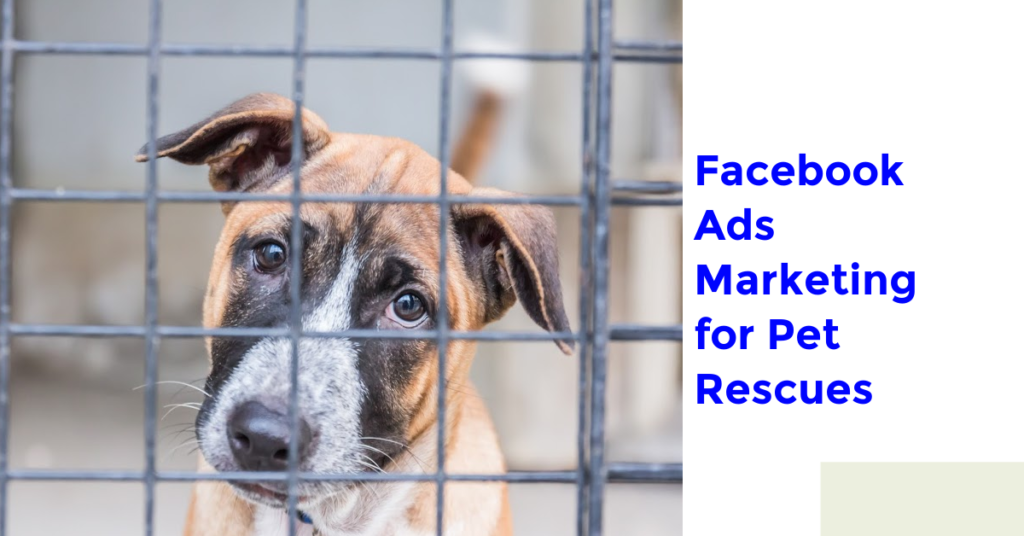 Facebook Ads Marketing for Pet Rescues